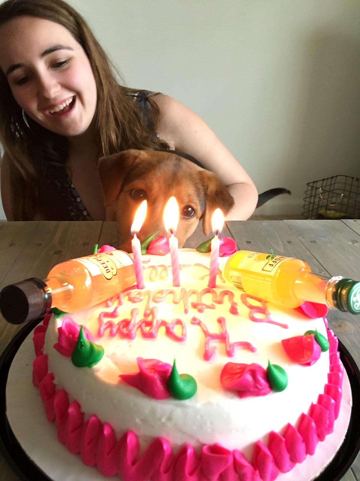 21st birthday cake with little liquor bottles