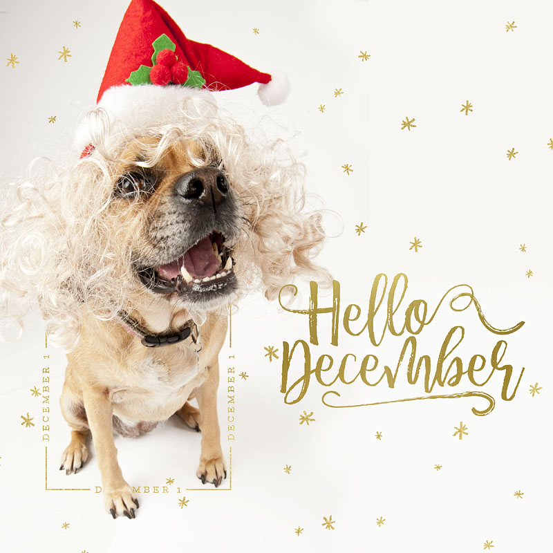 Dog Days of December Daily