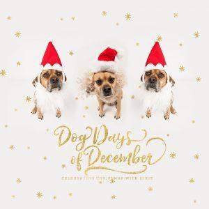 Dog Days of December Santa Dog Book