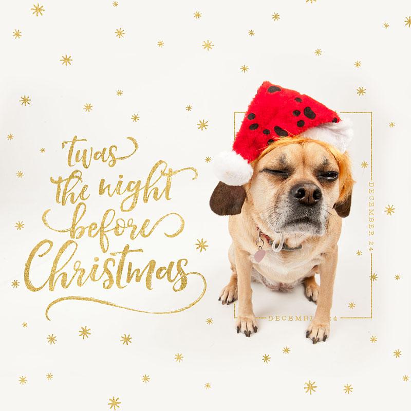 Dog Days of December