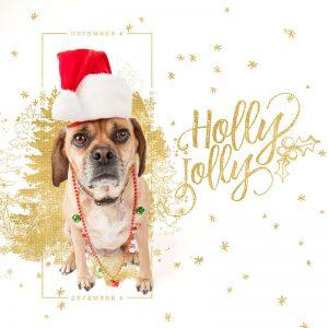 December Daily Dog Days of December