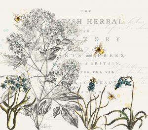 Katie Pertiet 100 Days of Botanicals