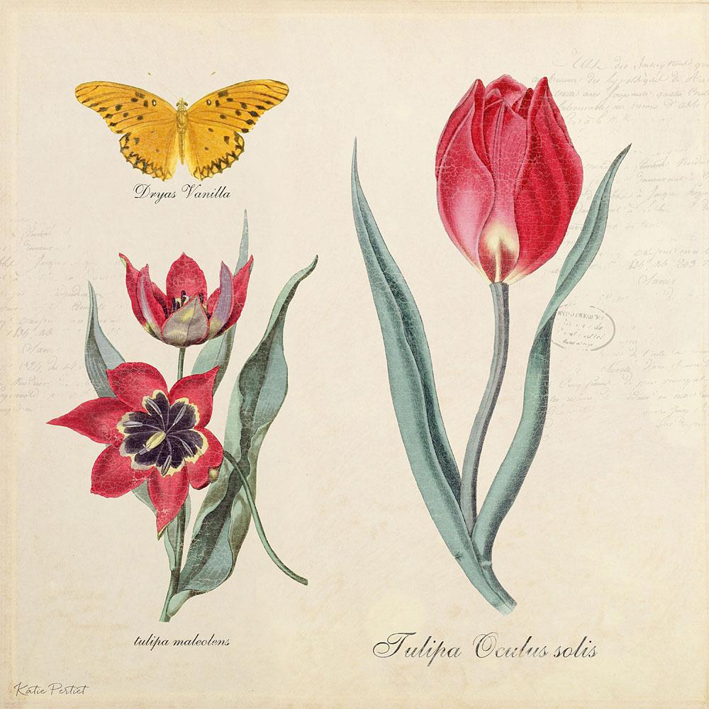 Katie Pertiet Classic Botanicals Tulip