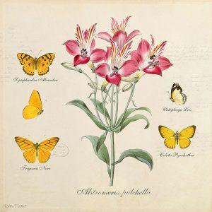 Katie Pertiet Classic Botanicals