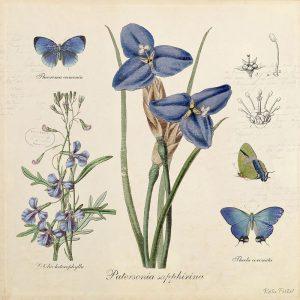 Katie pertiet Classic Blue Botanicals