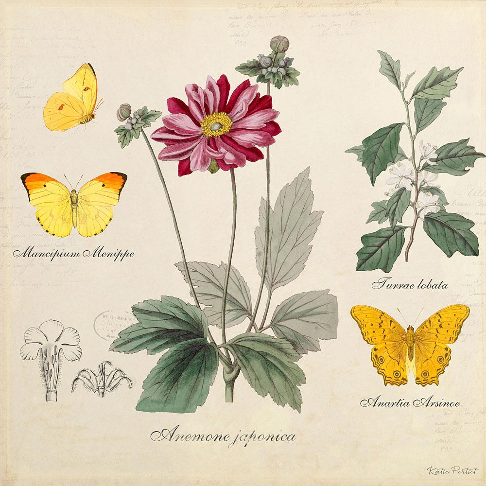 Katie Pertiet Classic Vintage Botanicals