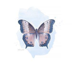 Katie Pertiet Butterflies
