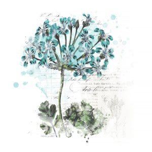 Katie Pertiet Botanical Art