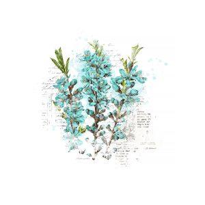 Katie Pertiet Vintage Painted Botanicals