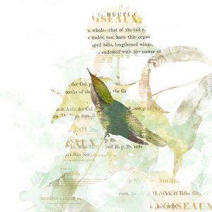 Katie Pertiet Hummingbirds