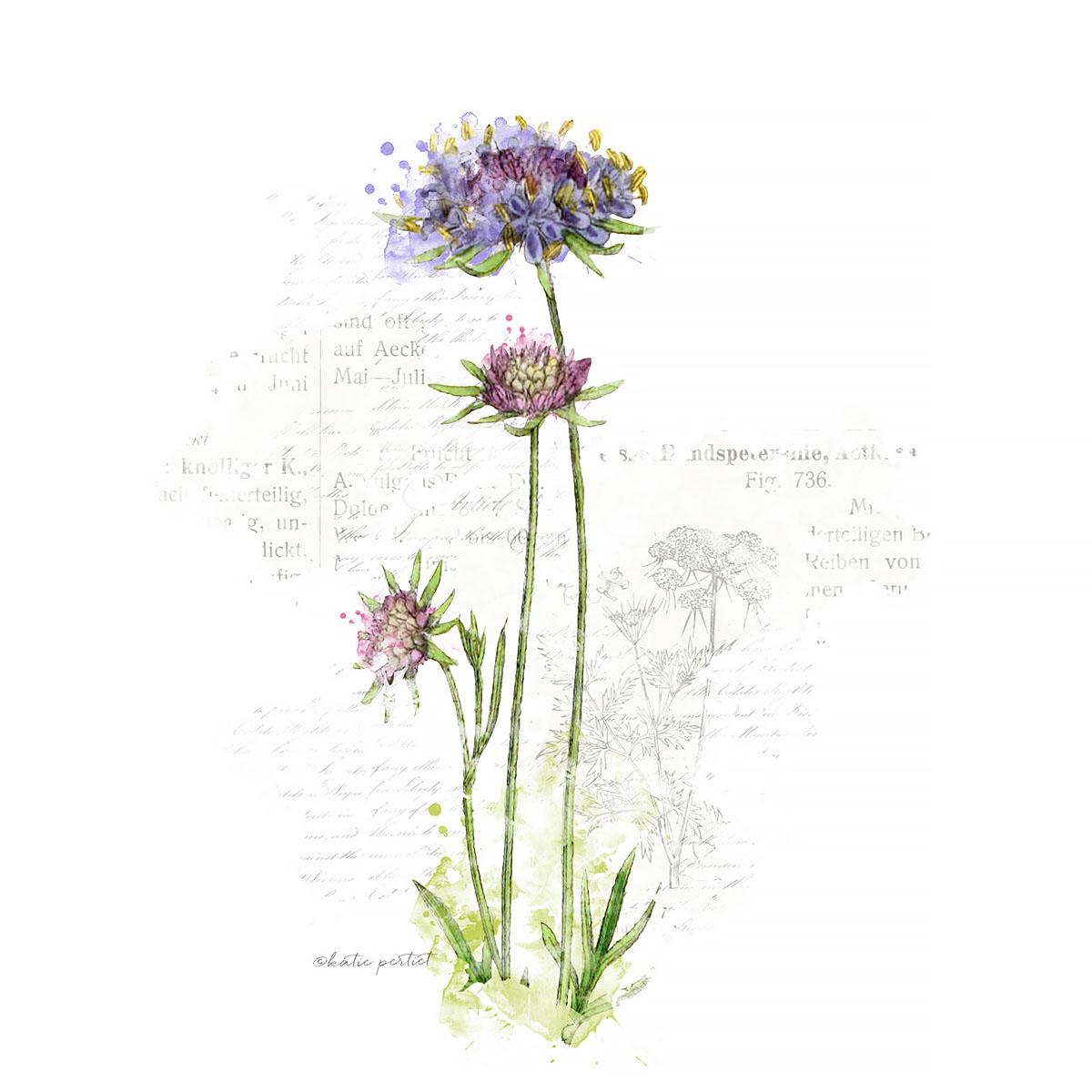 Katie Pertiet Painted Botanicals