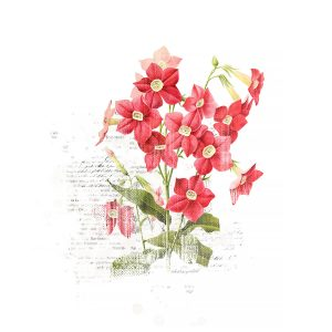 Katie Pertiet Vintage Botanicals