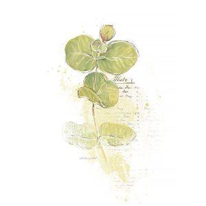 Katie Pertiet Painted Botanical