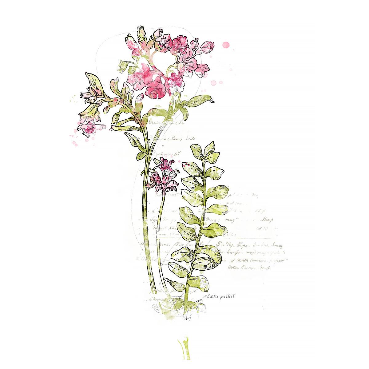 Katie Pertiet Botanicals